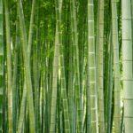 ¿Cómo deshacerse del bambú?
