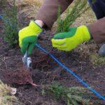 ¿Cómo plantar un seto?