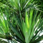 ¿Cómo proteger una planta exótica en invierno?