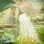 ¿Cómo regar tus plantas cuando hace calor?