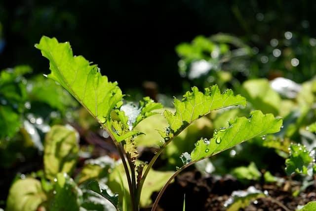 ¿Cuándo debería comenzar a plantar verduras de otoño?