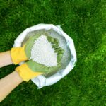 ¿Cuándo poner fertilizante en el césped?