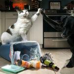 ¿Es su casa a prueba de mascotas?