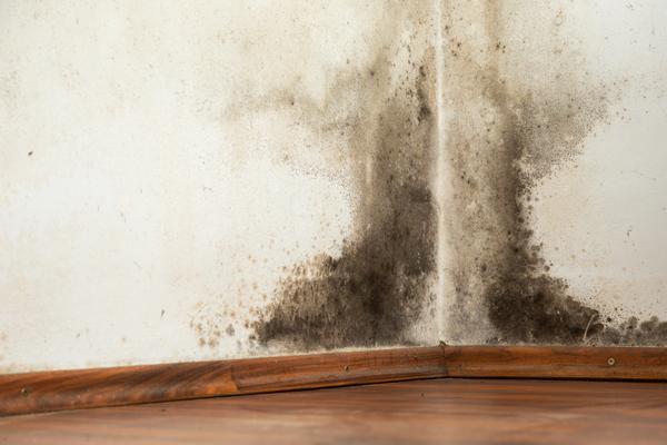 Moho negro en la pared de una casa