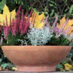 ¿Qué plantas elegir para florecer un balcón en invierno?