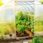 ¿Qué suelo para un invernadero de jardín?