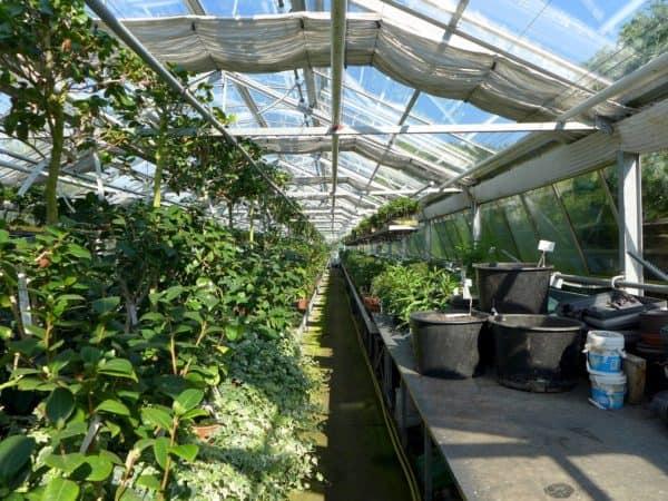 El mito de la zona de rusticidad de las plantas
