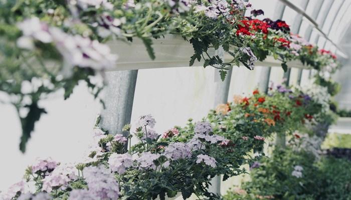 Cómo crear tu propia pared de plantas hermosa