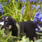 6 consejos para tener un jardín apto para perros