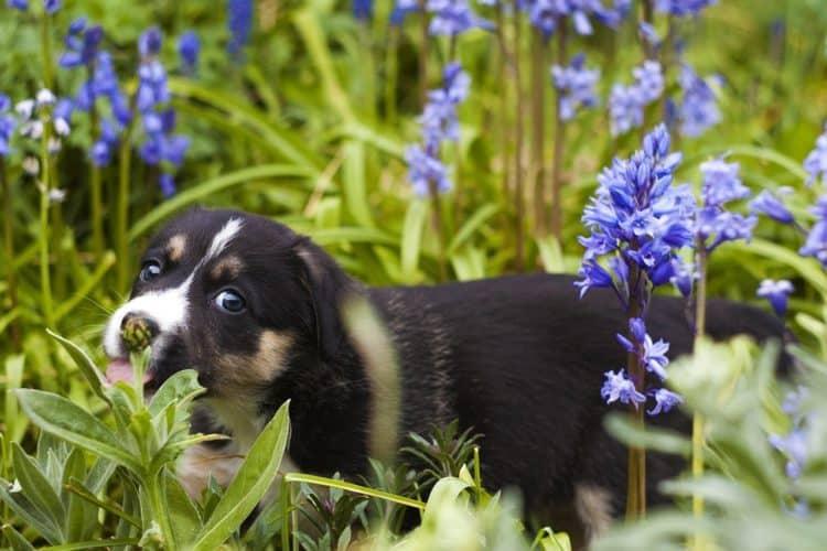 6 grandes consejos para un jardín apto para perros