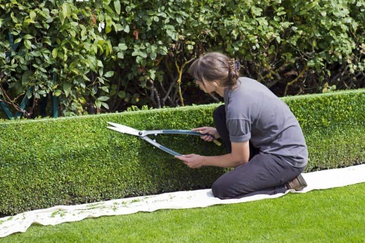 Tijeras de jardín: cuidado y mantenimiento