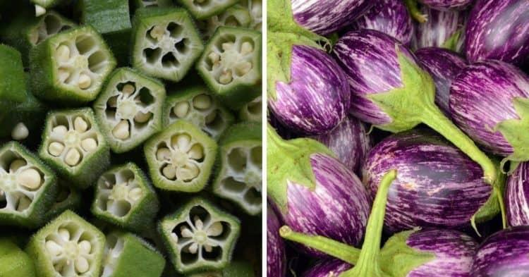 12 excelentes verduras para cultivar a pleno sol