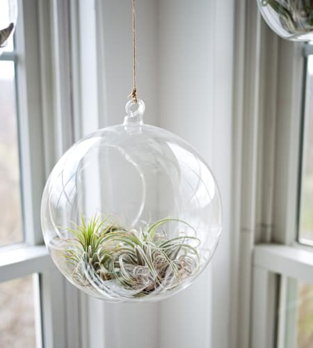 Terrario colgante de vidrio transparente