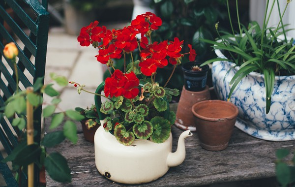Flor roja en maceta rodeada de plantas
