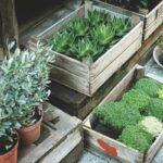 Ideas para patios pequeños: qué plantas usar