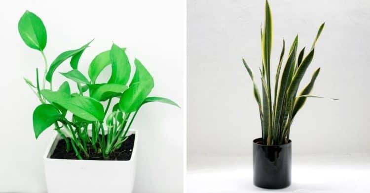 ¡Las 13 plantas de interior más fáciles que cualquiera puede cultivar!