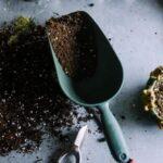 Es un mito del jardín que la tierra para macetas no debe reutilizarse: este es el motivo