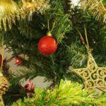 ¿Con qué frecuencia riegas un árbol de Navidad vivo?