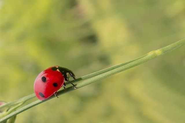 atraer insectos beneficiosos