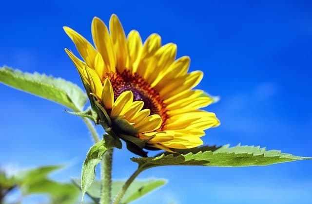 asegurar la luz solar adecuada