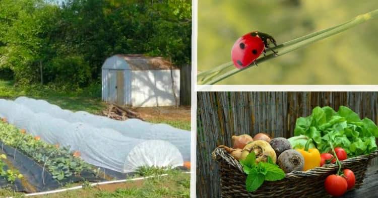 11 métodos orgánicos de control de plagas para proteger su jardín