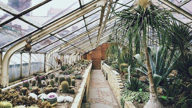 cultivo de plantas exóticas en invernadero.