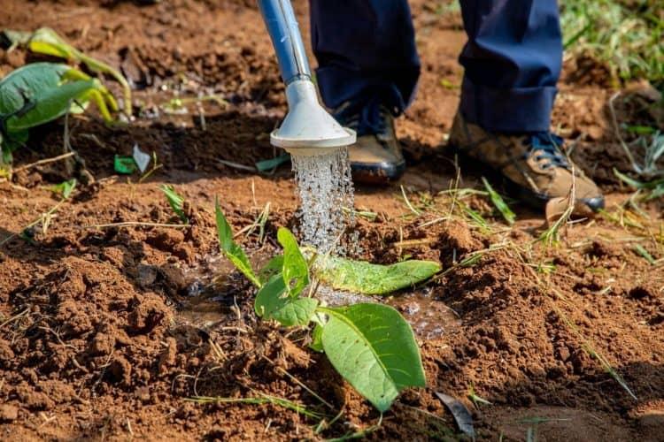 10 consejos para ahorrar agua en su jardín