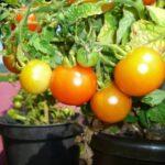 14 errores de jardinería en macetas que se deben evitar