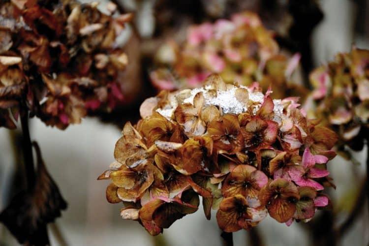 ¿Cómo se sabe si una planta está inactiva o muerta?