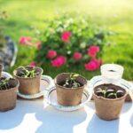 10 secretos del éxito del huerto de patio