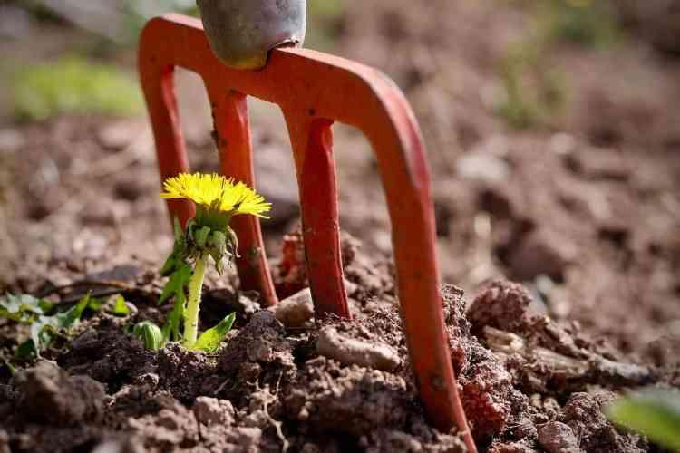 tenedor de jardín cavando malas hierbas