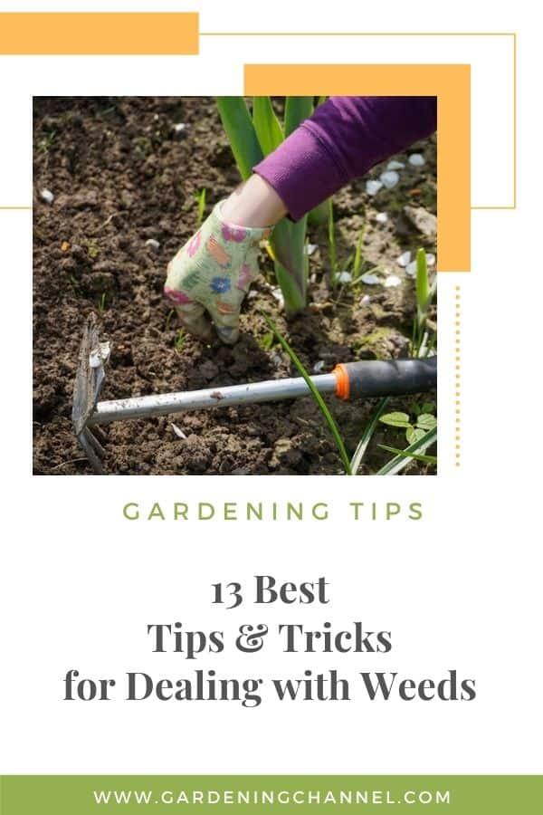 desmalezar el jardín con superposición de texto 13 mejores consejos y trucos para lidiar con las malas hierbas