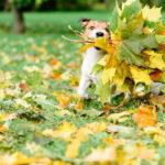 Los peligros del jardín para tu cachorro