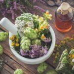 11 plantas medicinales para cultivar en tu jardín