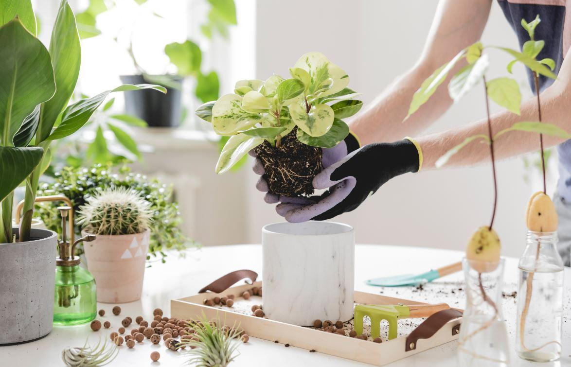 Rempoter Plante Intérieur