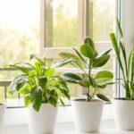 10 plantas que absorben la humedad