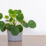 30 plantas de interior indestructibles