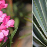 8 plantas que resisten el calor
