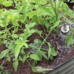Regar el jardín en climas cálidos: consejos para el éxito