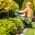 ¿Cómo encontrar ayuda para el mantenimiento de su jardín?