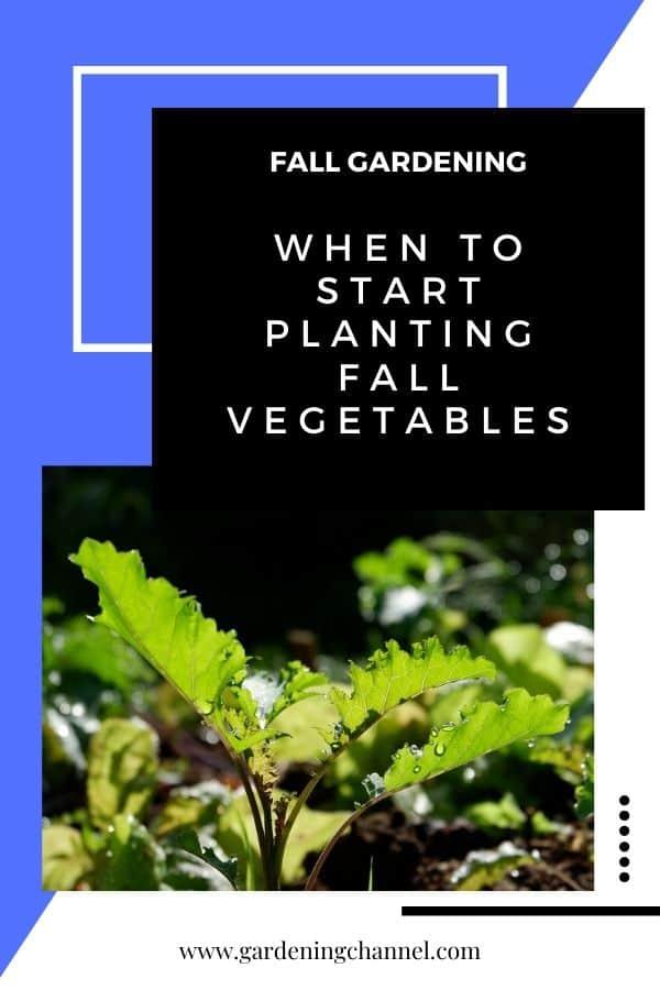 col rizada en el jardín con texto superpuesto jardinería de otoño Cuándo comenzar a plantar verduras de otoño