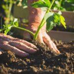 ¿Cómo plantar con éxito sus verduras en el huerto?