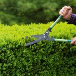 9 herramientas de jardinería esenciales para podar