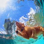 Consejos de limpieza para el pelo de perro en la piscina
