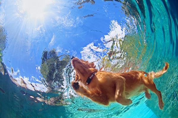 Pelo de perro en piscina