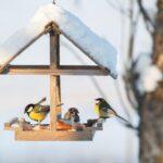 Jardín: 10 consejos para alimentar pájaros en invierno
