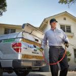 Los tres principales signos de termitas que debe buscar en su hogar