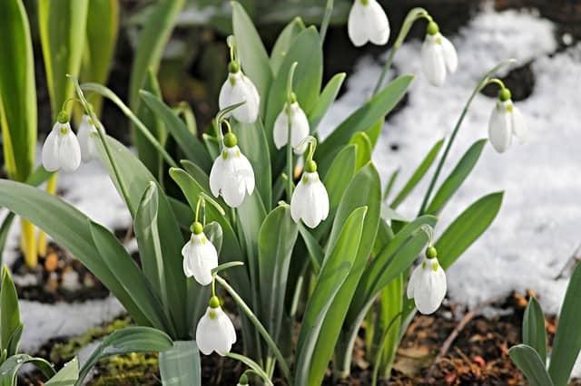 Plantas que crecen en invierno en muchas zonas de jardín