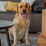 Cómo reducir el daño causado por las mascotas en casa